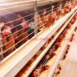 Guter Preis-automatische Geflügelfarm-Geräten-Schicht-Huhn-Batterie-Drehung-Schlüssel-Lösung