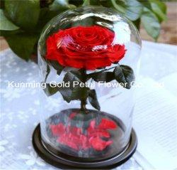 Bewaarde Doos van de Giften van de manier nam de Beste Bewaarde Bloemen in de Koepel van het Glas toe