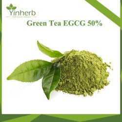 Reines natürliches grüner Tee-Auszug-Puder/Tee-Polyphenol-Puder 50%/EGCG 60%/L-Theanine 98%