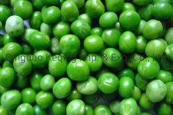 Goede kwaliteit Nieuw gewas vers bevroren groenten bevroren Peas