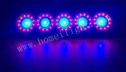 5 olhos Fase Parte Discoteca DJ LED de luz Chameleon Bar