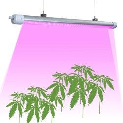 160lm/W spettro dentellare competitivo 200W Il migliore LED coltiva l'alta efficacia chiara coltiva gli indicatori luminosi che il LED coltiva gli indicatori luminosi per crescere
