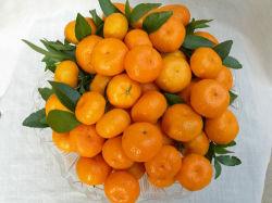 Hochwertig für gelbe Navel-Orange