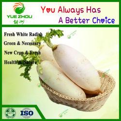 Nuovo piatto bianco cinese Crop con qualità superiore