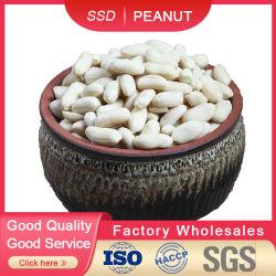 Amêndoas de amendoim em branco 35/39 usadas em alimentos