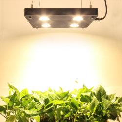 Amazon Hot Vente Vintage sans ventilateur jardin horticole 400W de lumière à LED à spectre complet des systèmes de culture hydroponique de croître COB croître Lampe à LED