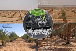 Resistência à seca Super Polímero absorvente para plantas tolerantes seca Califórnia