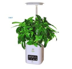 2021 grote Cadeauselectie - populaire artikelen - Air Refresh, LED-lamp met Bluetooth-luidspreker