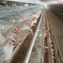 Caldo ha galvanizzato un tipo strumentazione dell'azienda avicola della gabbia di strato del pollo