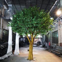 Comercio al por mayor de todo tipo de forma natural artificiales Ficus Bonsai Árbol con tronco de fibra de vidrio en el interior de las plantas de exterior