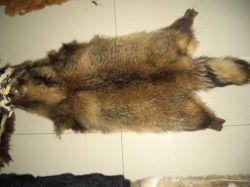 Waschbär-Hundepelz (009)