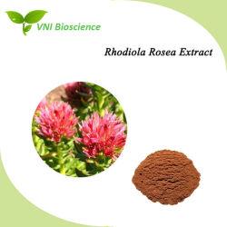 ISO SGS Certified Rhodiola Rosea Extracto Natural para antitumorais