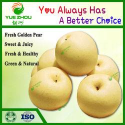 Gouden Peer van de Peer van China van de Verse Vruchten van de levering de Verse Zoete voor Verkoop