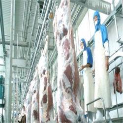 Оборудование для убоя скота крупного рогатого скота крупного рогатого скота/кошерная убоя птицы