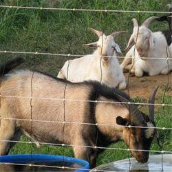 Китай хороший организатор крупного рогатого скота ограждения провод / Ферма фехтование проволочной сетки для травяных культур