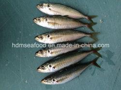 Oferta de productos acuáticos Jurel Congelado Pescado
