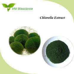 La certificación ISO 100% naturales Chlorella en polvo, con la mejora de la inmunidad
