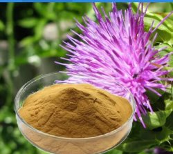 Natürlicher Pflanzenmilch-Distel-Auszug für schützen Leber