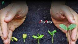 植物成長性刺激物に使用される水素栄養溶液