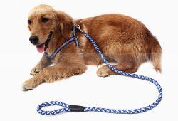 Chicote trançado com reflector de cão de estimação Leash Caminhadas Formação Correia Pet Segura