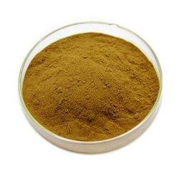 オイルの重量を失う溶ける緑茶のエキスの茶ポリフェノール