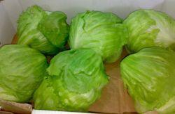 La laitue Iceberg organique de légumes frais du fournisseur