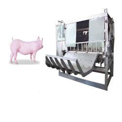 Equipamentos de abate/Equipamentos para abate de gado suíno