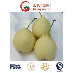 Свежий китайский (ISO и HACCP, GLOBALGAP) Ya/Азии/Хуан Гуань Груши