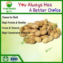 Haut de la qualité de l'arachide brute dans le shell avec des prix bon marché