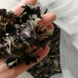 La nourriture chinoise en bois noir naturel de l'oreille oreille Agaric séchés de champignons champignon noir