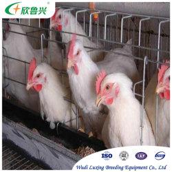 جهاز مزرعة الدجاج المرقلى نوع ساعة بطارية الطبقة العجوز للزراعة السقيفة