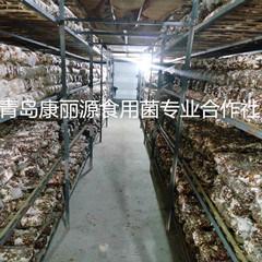 Shiitake Mushroom Logs (spawn) Корея