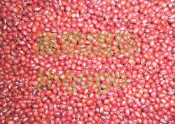 China exportación nueva cosecha de frijol rojo de buena calidad