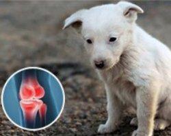 La atención de salud Probios apoyo solidario Nutrición Animal inhibir la inflamación de las articulaciones con colágeno