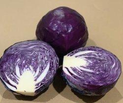 Cavolo rosso/viola fresco