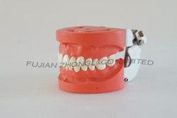 Disco Rígido Dental Gengiva Modelo da Garra