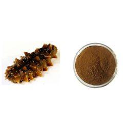 Le concombre de mer végétarien/d'aliments congelés et de santé de la nourriture/extrait de concombre de mer