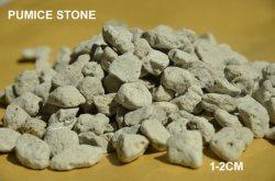 Helle Gesamtheit verwendete Bimsstein-fleischige Pflanze verwendetes Poliermittel