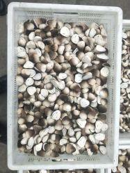 La paille de champignons frais surgelés IQF