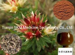 Pure fraîches 1%~9 % Rosavin Salidrosides, extrait de Rhodiola rosea