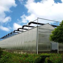 Proyecto llave en mano inteligente agrícola Control automático de múltiples PC policarbonato de gran amplitud de la hoja de tomate de invernadero vegetal y con el sistema hidropónico