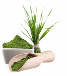 مسحوق عصير عشب القمح العضوي عالي الجودة مسحوق عشب القمح