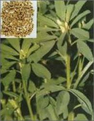 4-Hydroxyisoleucine 10 %, 20 % par HPLC Extrait de graines de fenugrec