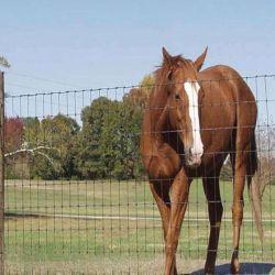 La fabricación de Anping alambre galvanizado de pastizales caballo Net vallado de seguridad