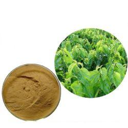 Estratto naturale della pianta della polvere dell'estratto del foglio del gelso