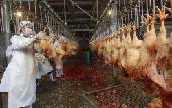 La Chine l'abattage de poulet de ligne de production / l'abattage de poulet Maison à vendre