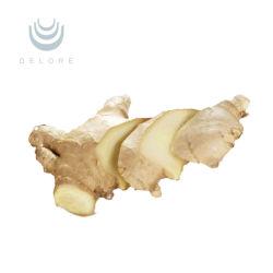 Extrait de gingembre naturel 100% de haute qualité extrait de racine de gingembre gingembre Extraire la poudre