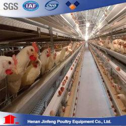 Automatische Poultry Equipment Layer Broiler Chicken Cage Landbouwmachines