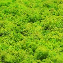 Les plus populaires de différents types préservé le tapis de mousse verte artificielle pour le paysage de la décoration murale