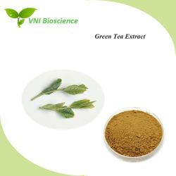 Extracto de té verde de alta calidad para hipolipemiantes